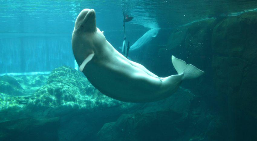 Visiting Georgia Aquarium in Atlanta, Georgia