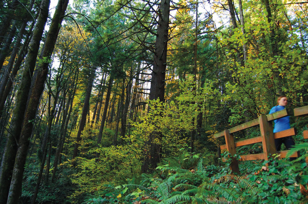 Fun things to do in Portland, Oregon - visit Forest Park