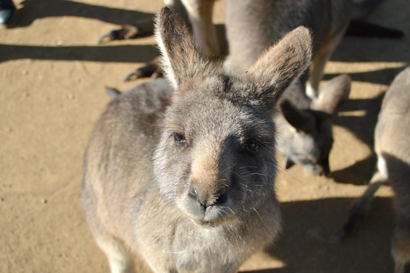 Things to do in Hobart in Tasmania, Australia: Celebrate Australia Day