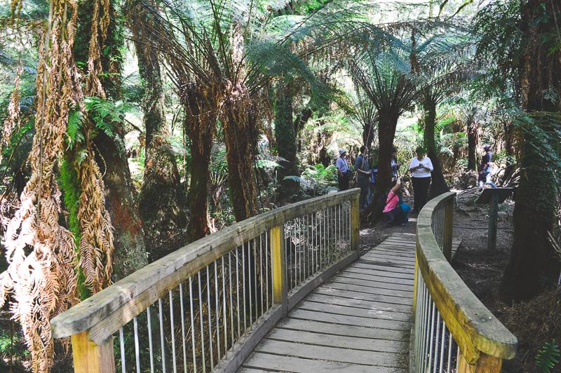 Visit Melba Gully along the Great Ocean Road