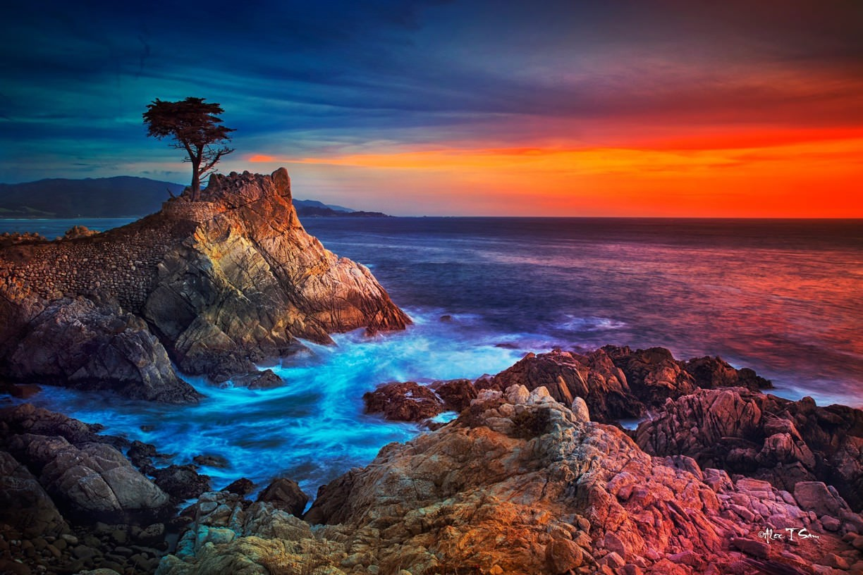 Lone Cypress Tree on a rugged cliff in Monterey, California (Monterey hotels)