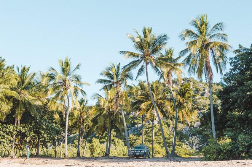Palm tree-fringed beach at Radical Bay on Magnetic Island