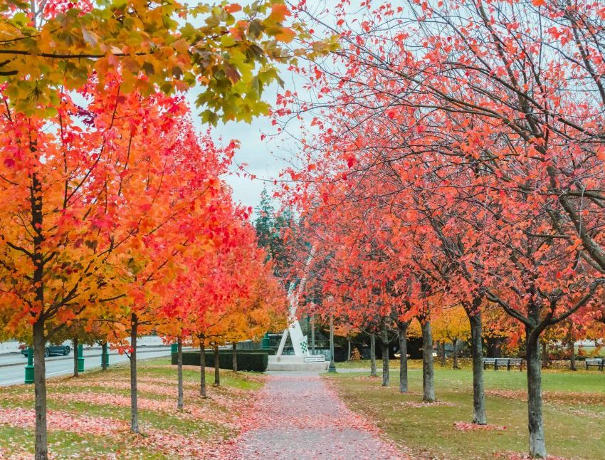 Fall in Vancouver, Canada