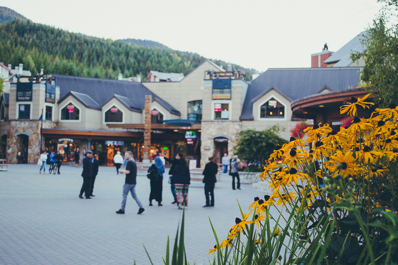 Yellow flowers backdropped by buildings in Whistler Village (start here on your Whistler day trip).