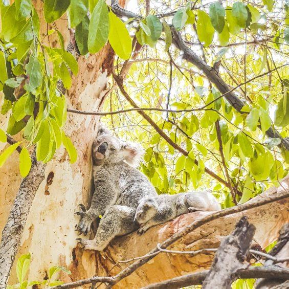 Another reason to love Australia - Aussie animals.