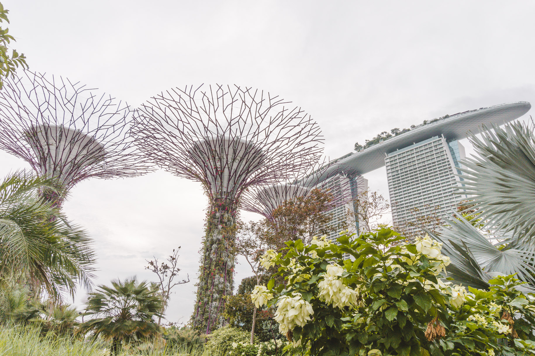 Singapore photos: looking up at Supertree Grove in Gardens by the Bay and Marina Sands.