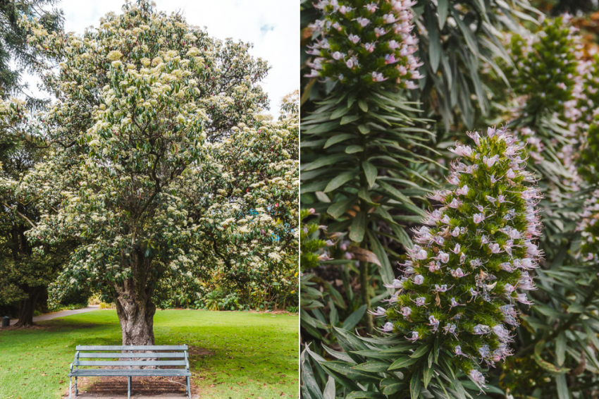 Go for a walk through the Botanic Gardens during your weekend in Adelaide.