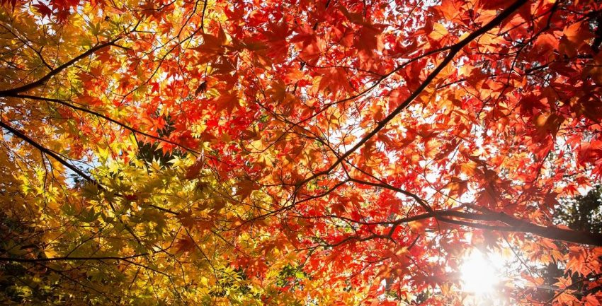 Check out the best Bristol day trips, including to Westonbirt Arboretum.