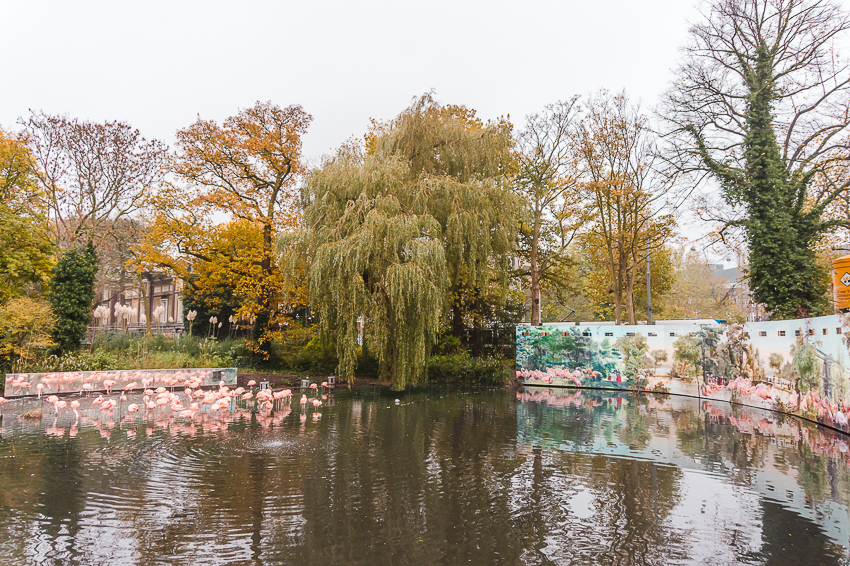 Three Days in Amsterdam: visit ARTIS Royal Zoo