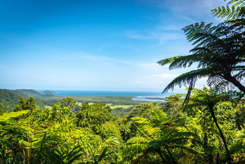 Things to do in Cairns - visit the Daintree Rainforest