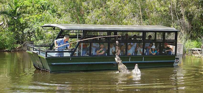 Things to do in Cairns - visit Hartleys Crocodile Adventures