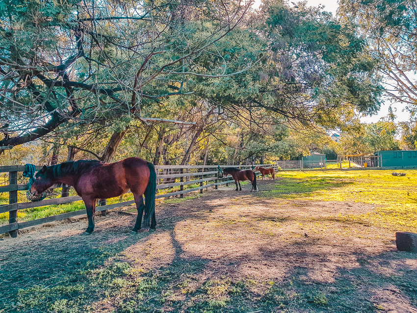 Things to do in Melbourne for families - visit the horses at Collingwood Children's Farm