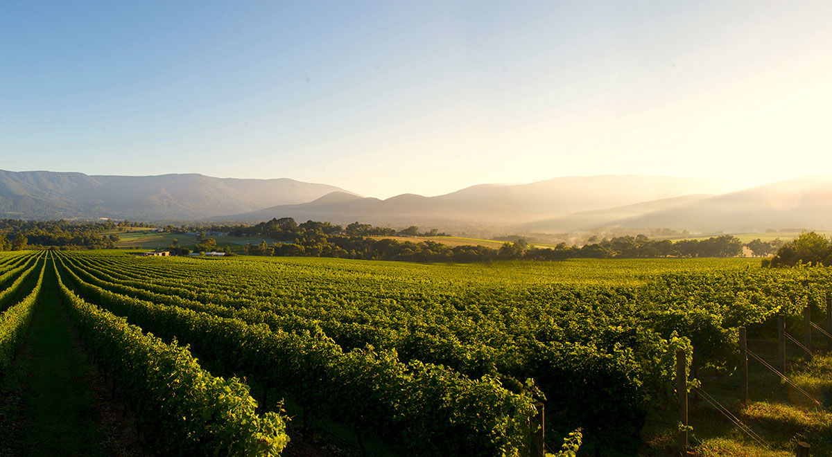 Things to do in Melbourne - a Yarra Valley winery day trip
