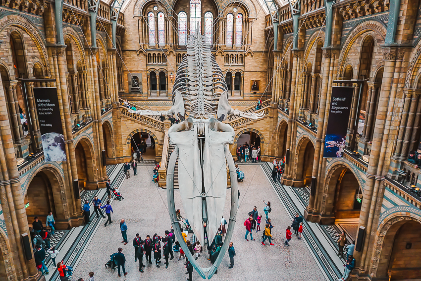 Inside the Natural History Museum in London, England